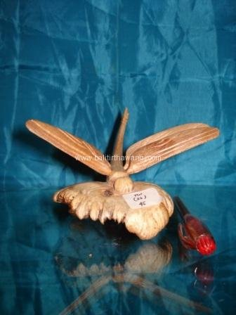 Dragonfly Parasit Wood<br>TW0284